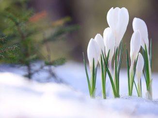 3 sygnały, że w Twoim ogrodzie zaczęła się wiosna