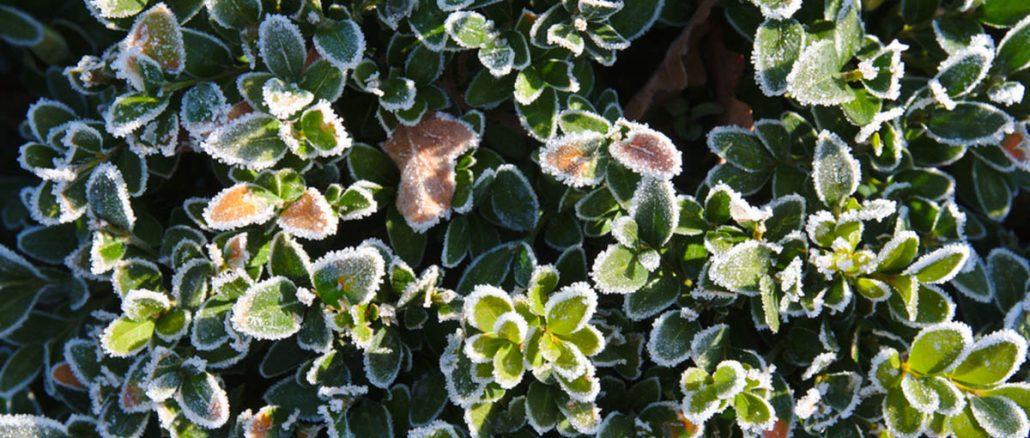 Nie tylko zimna Zośka! Jak ochronić rośliny przed wiosennymi przymrozkami