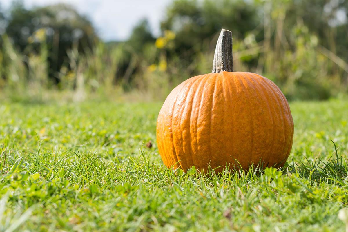 Jak pielęgnować trawnik wpaździerniku?