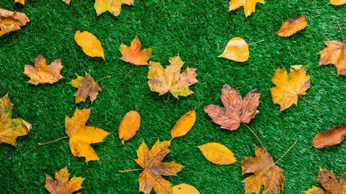 Pielęgnacja trawnika jesienią – jak przygotować trawnik na zimę?